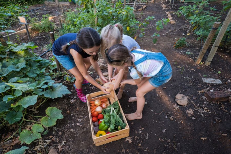 Young kids harvesting fresh vegetables from the vegetable garden